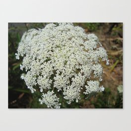 The Queen's Lace Canvas Print