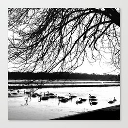 Swans in wintertime in the North of theNetherlands Canvas Print