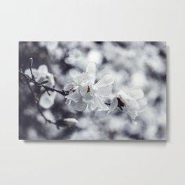 White Magnolia Flower  Metal Print
