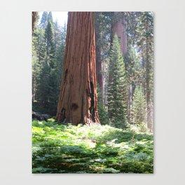 Crescent Meadow Sequoia Canvas Print