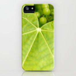 Maturing wine grapes iPhone Case
