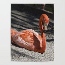 Florida Flamingo Poster