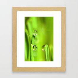 Wet Grass With Raindrops Framed Art Print