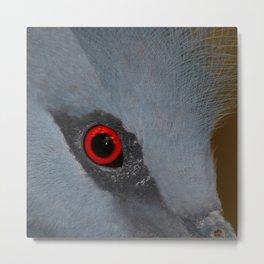 Victoria Crowned Pigeon Eye  Metal Print