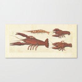Lobster, Crawfish and Shrimp Vintage Illustration, 1560 Canvas Print