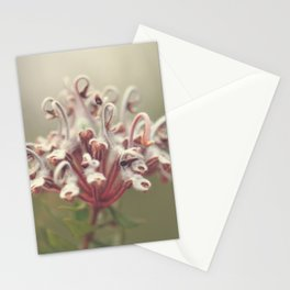 Grey Spider Flower Stationery Cards