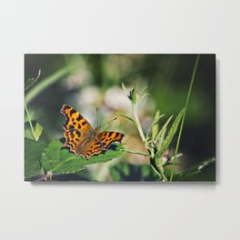 Comma Butterfly Metal Print