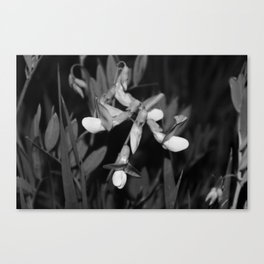 B&W Wildflower Canvas Print