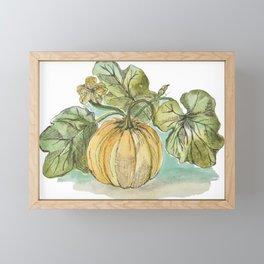 Antique Botanical Sketch Pumpkin Framed Mini Art Print