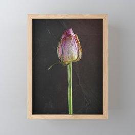 Old Rose on Slate Framed Mini Art Print