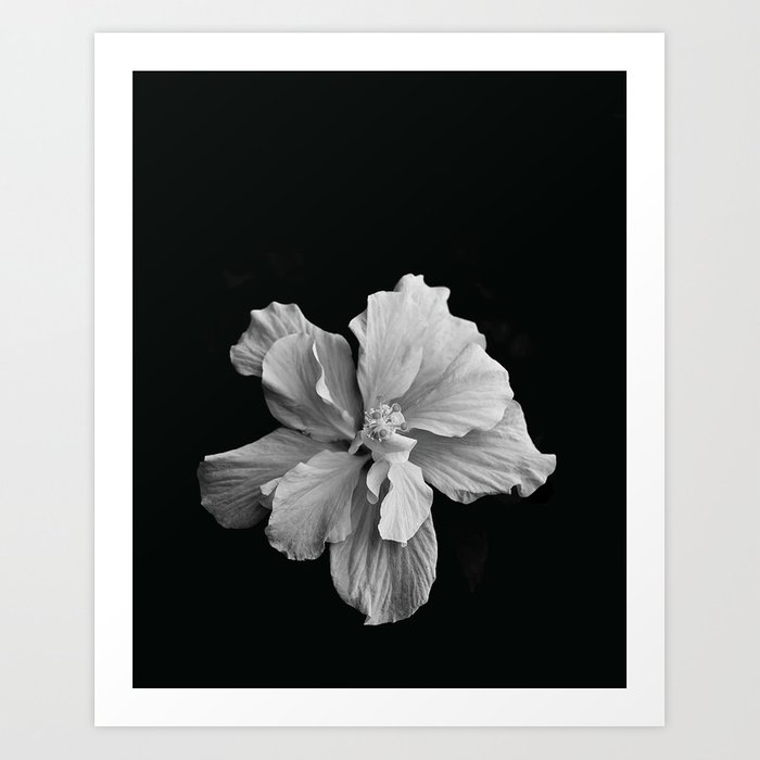 Hibiscus Drama Study Black White High Impact Photography Art