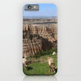 Bighorn Sheep At Sage Creek iPhone Case
