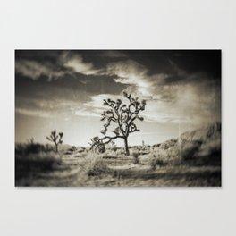 cactus print, cactus décor, southwestern décor, southwest, saguro, southern California Canvas Print
