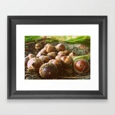 Acorns Framed Art Print
