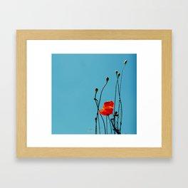 Mohn Framed Art Print