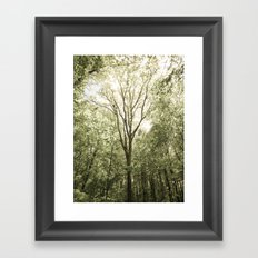 Branches of Life Framed Art Print