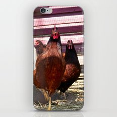Hens in the House iPhone & iPod Skin