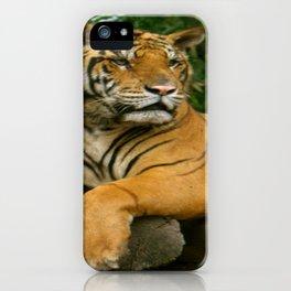 hai der tiger iPhone Case
