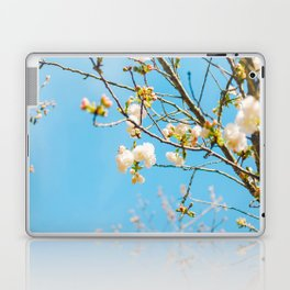 White Blossoms In Spring Against Blue Sky Laptop & iPad Skin