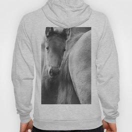 Original horses photo. Black & White, fine art, animal photography, landscape, b&w Hoody