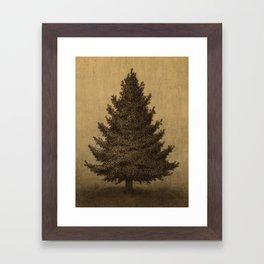Lonely Pine  Framed Art Print