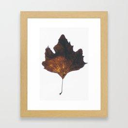 Illuminaire Framed Art Print