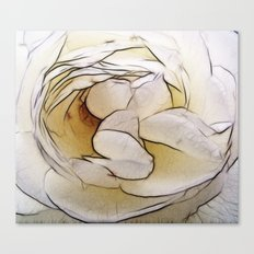 Nothing is so fair as a pure white rose Canvas Print