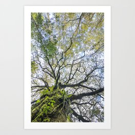 Centenary oak with the trunk covered in moss and green plants Art Print
