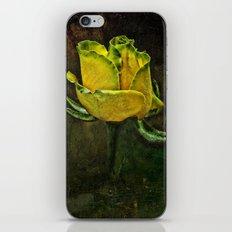 Rose Of Yellow iPhone & iPod Skin
