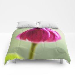 Tulip Wendy Comforters