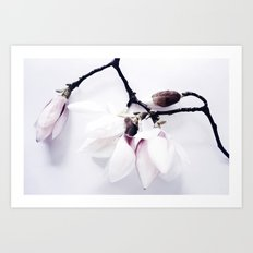 Magnolia Love Art Print