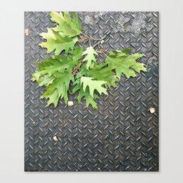 Oak Leaves on Metal Canvas Print