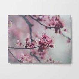 Pink Cherry Blossom On Branch Metal Print
