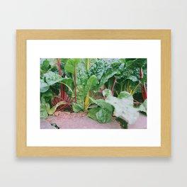 Rainbow Chard Framed Art Print