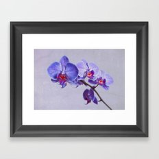 orchid (violet and red) Framed Art Print