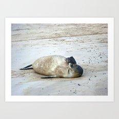Hawaiian Seal Art Print