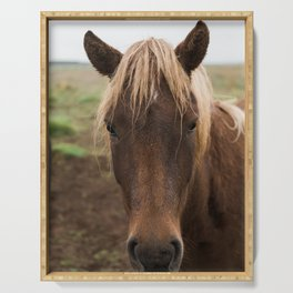 Horse in Iceland - nature photography Serving Tray