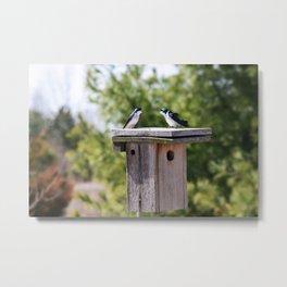 Tree Swallows on Nestbox  Metal Print