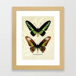 Butterfly15_Trogonoptera Brookiana • pair Framed Art Print
