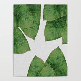 Banana Leaf I Poster