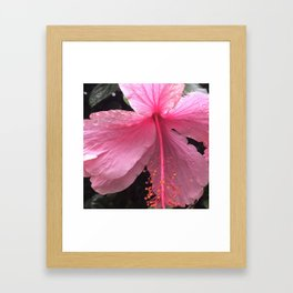 Dewdrops on Tropical Pink Flower Framed Art Print