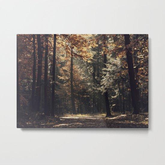 Autumn light and rays - horizontal Metal Print