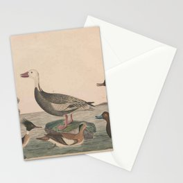 Pied Duck Red breasted Merganser American Widgeon Snow Goose Blue Bill or Scaup Duck Hooded Merganser13 Stationery Cards