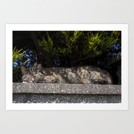 Sleeping cat in the shade on top of a wall Art Print