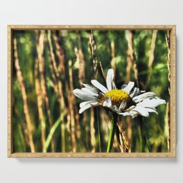 Single camomile Serving Tray