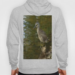 Juvenile Yellow Crowned Night Heron Hoody