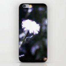 Blue Daisy iPhone & iPod Skin