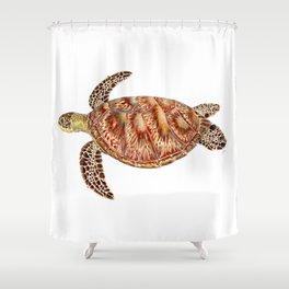 Green turtle Chelonia mydas Shower Curtain