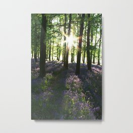 Bluebell Woods at Sunrise Metal Print
