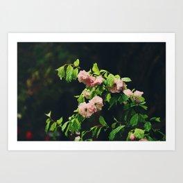 Wet Blossoms Art Print